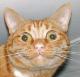DuelingCats avatar
