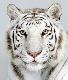 Basel Nimer avatar