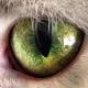 NMA avatar