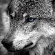 IsmiKin avatar