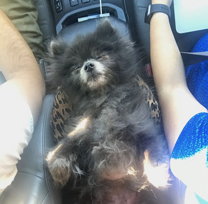 comfy toshi